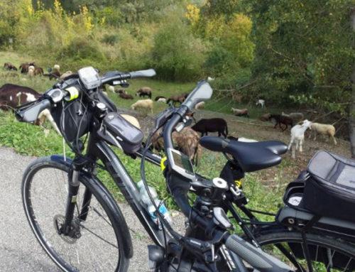 La Modena dei Navigli e dei Cammini Storici